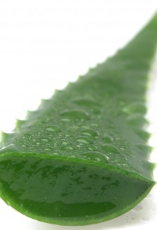 Aloe vera, miracolul din natura