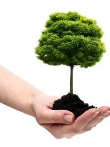 Gradinaritul durabil, prin plantarea copacilor